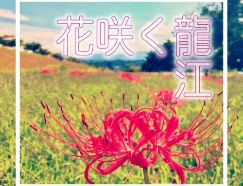 花咲く龍江