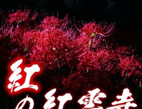 旬のスポット紅の紅雲寺